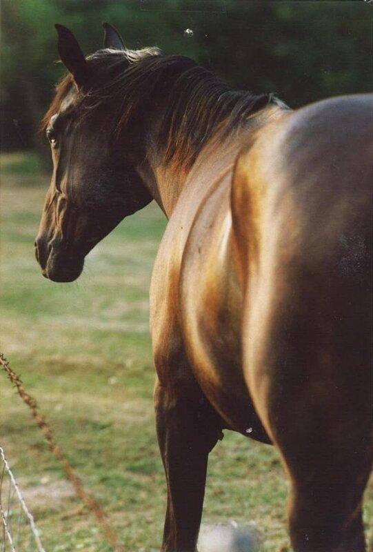 photo cheval de dos
