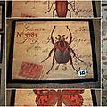 Cadres insectes esprit