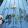 Inventaire des graines du jardin