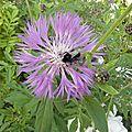 fleurs-de-breche (94)