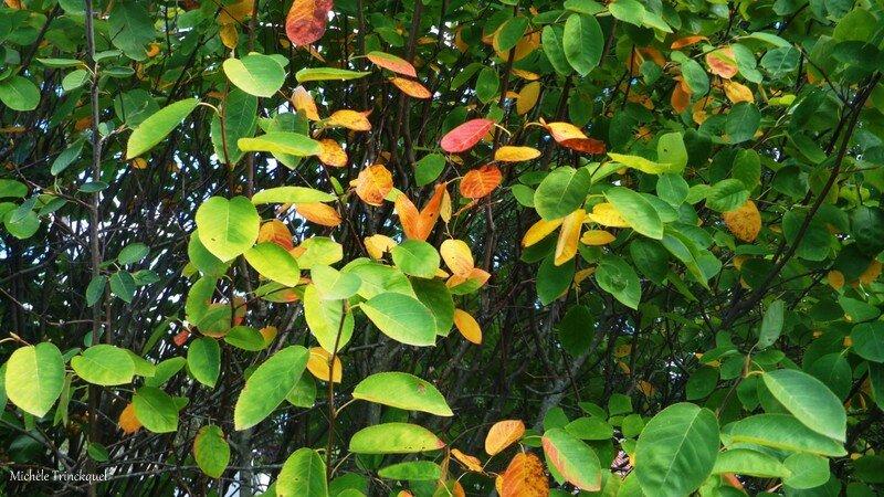 Fleurs, feuilles et fruits de Léon 180916
