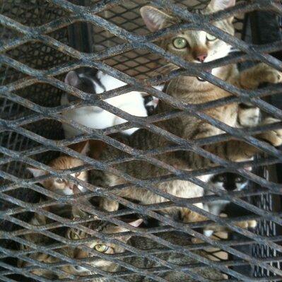 cage d'euthanasie
