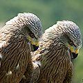 Pour les fans d'ornithologie