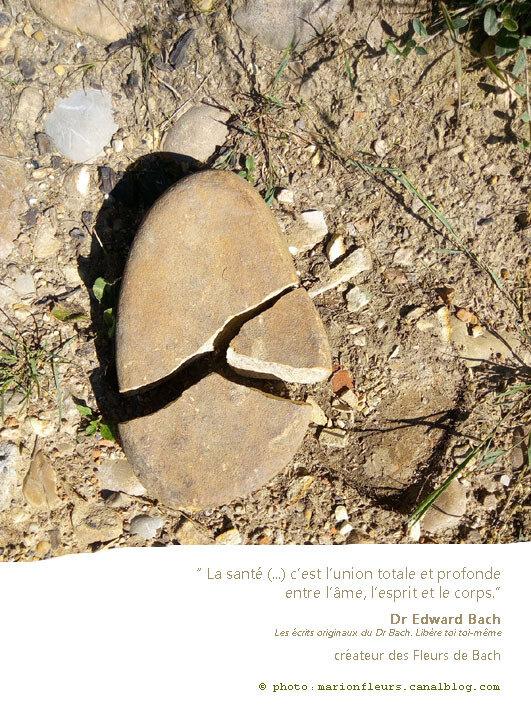 Transformer le besoin de se soigner en nécessité de se guérir / Nos 3 dimensions / Citations : M. Odoul, Dr E. Bach, P. Darré