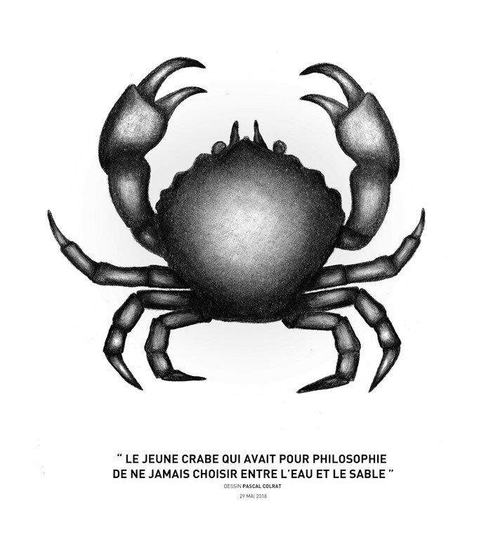 """"""" le jeune crabe qui avait pour philosophie de ne jamais choisir entre l'eau et le sable """""""