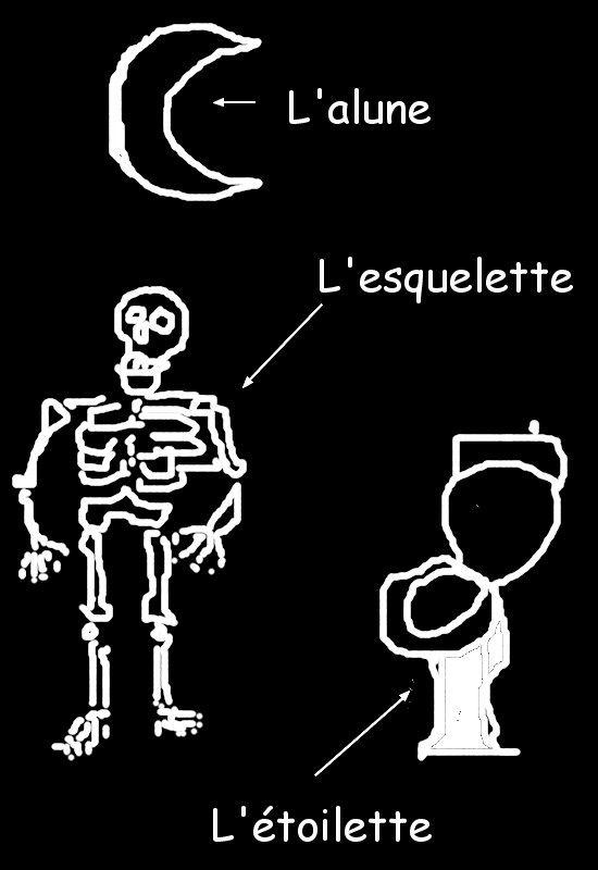 alune_esquelette