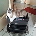 The hotcat...