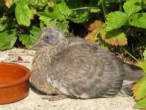 blog_pigeon