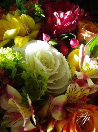 fleurs_octobre