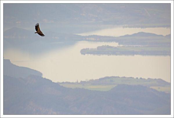 Aragon lulu2 160413 3 vautour embalse brume matin