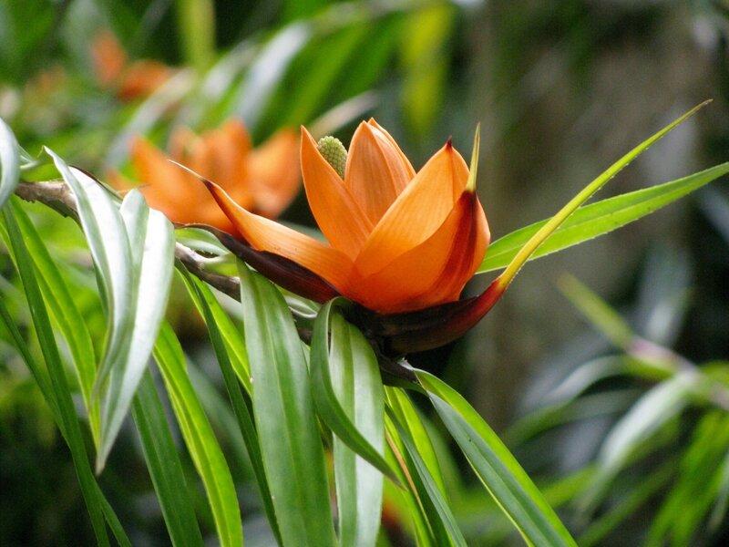 Fleur - Jardin de Balata © PetitNim