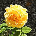 Parc floral ...