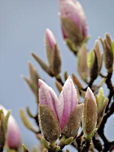 printemps_2010_036