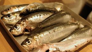 sardine191