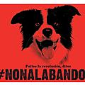 8( chaque jour une moyenne de 274 animaux sont lâchement abandonnés en france !!!!
