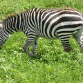 2010-03-09 Ngorongoro (270)