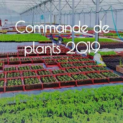 Commande de plants au Potager du Cabanon