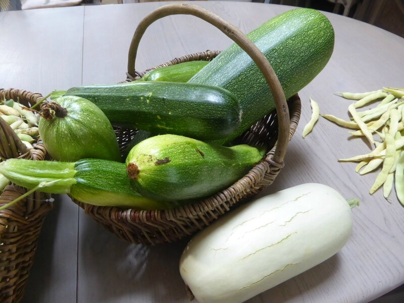 17-courgettes