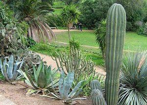Jardin du Rayol 2