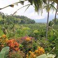 dans la campagne de TIRTAGANGGA, vue de la terrasse de la chambr