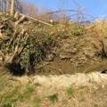 Les sols issus des flyschs (2)