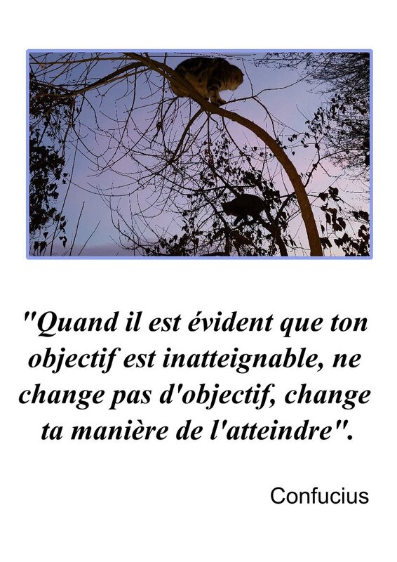 CITATION CONFUCIUS 2