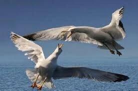 oiseau soutient