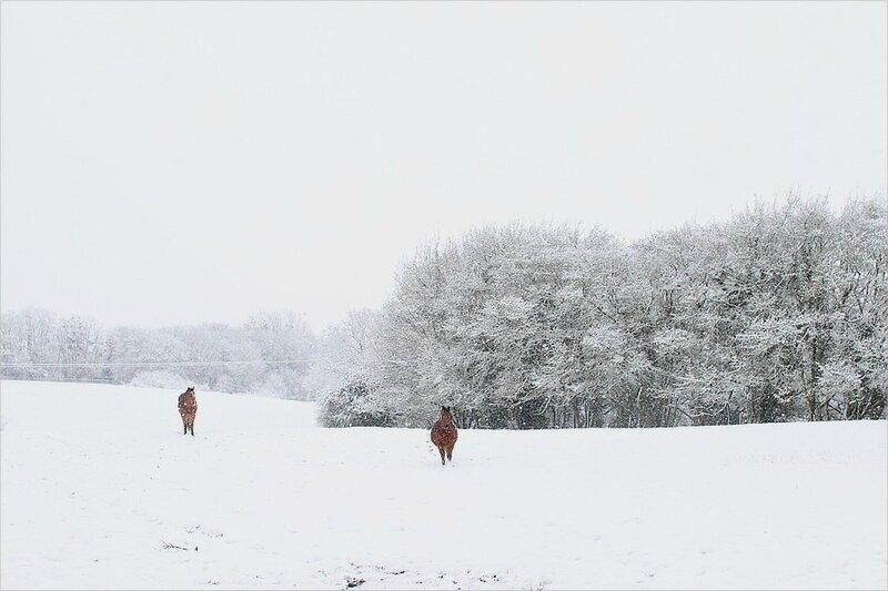 neige 173