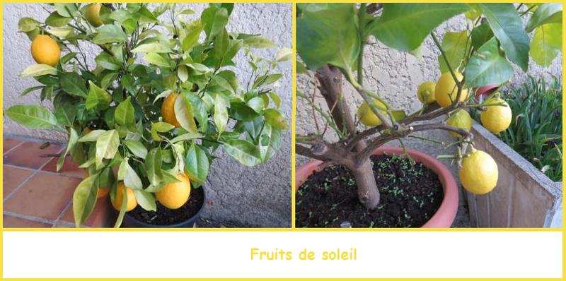 Fruits de soleil