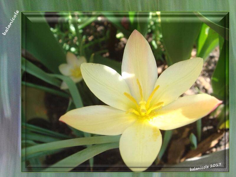 balanicole_2017_05_le printemps des tulipes_20_botanique 1