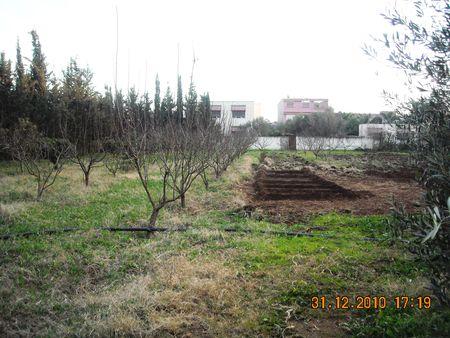 PASSASION_DIR_3_MARS_31_12_2010_047