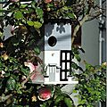Windows-Live-Writer/Dams-mon-jardin_C73C/DSCN1340_thumb
