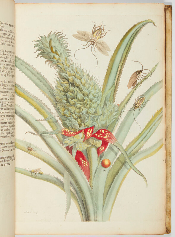 2019_NYR_17666_0115_002(maria_sibylla_merians_great_plate_books_on_insects_amsterdam_1719_1730)