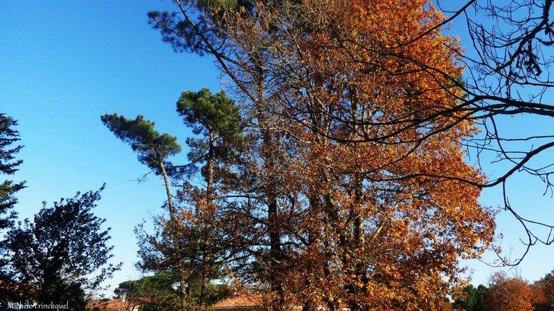 Feuillages automne 071215