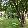 Postures de l'arbre