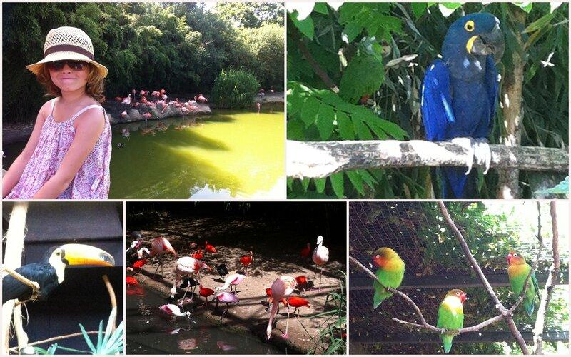 parc_des_oiseaux