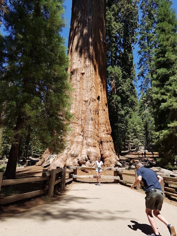 1108 sequoia7