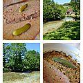 Terrine de canard & Nevy sur Seille Jura