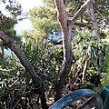 le jardin exotique de Monaco- oct