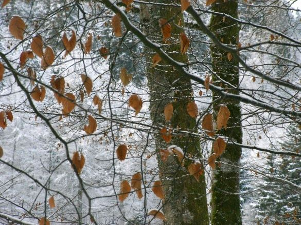 neige_feuilles_s_ches3ww