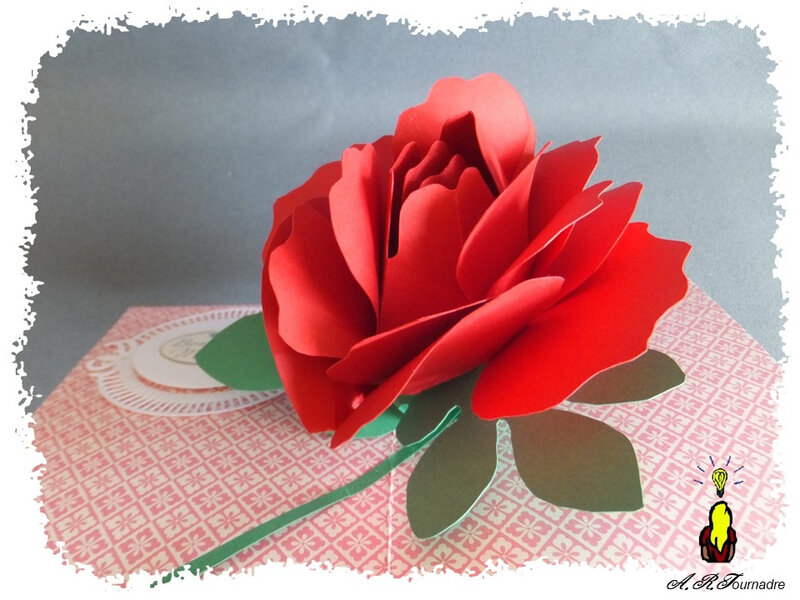 ART 2020 05 rose excentree 7