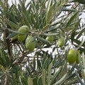 ...les olives.