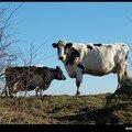 CHABANNE - noire et blanche