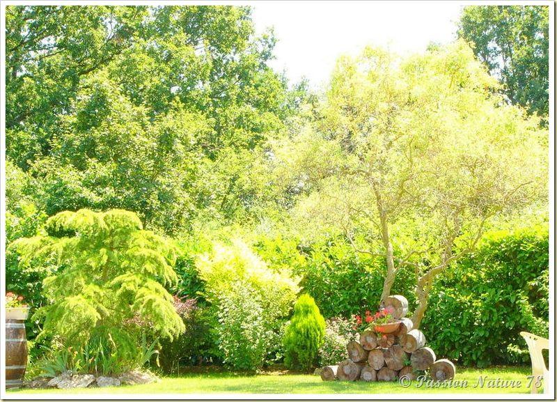 Petite promenade dans notre jardin (23)