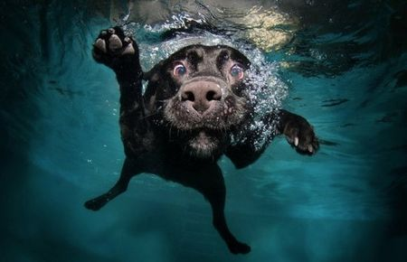 diving_dogs_photography12_550x354