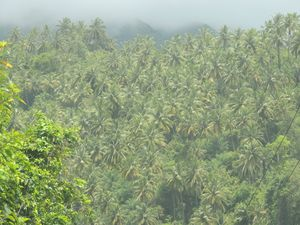 East Cost Coconut (5)