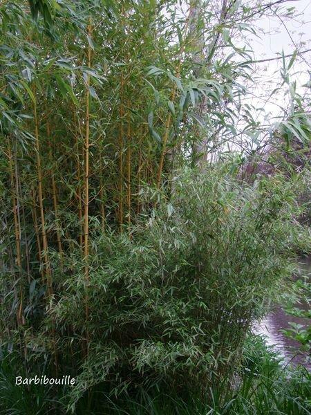 bambous autrey