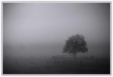 nb_arbre_2011_10_23_001_lg