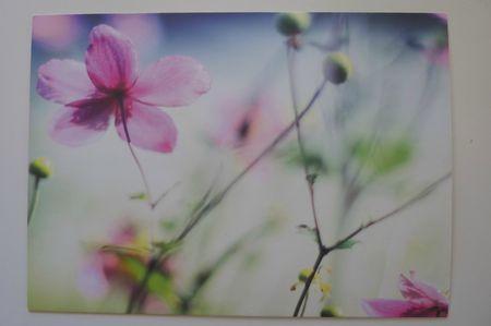 Echange printemps avec Séverine 3