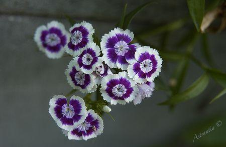bouquet_tout_fait9